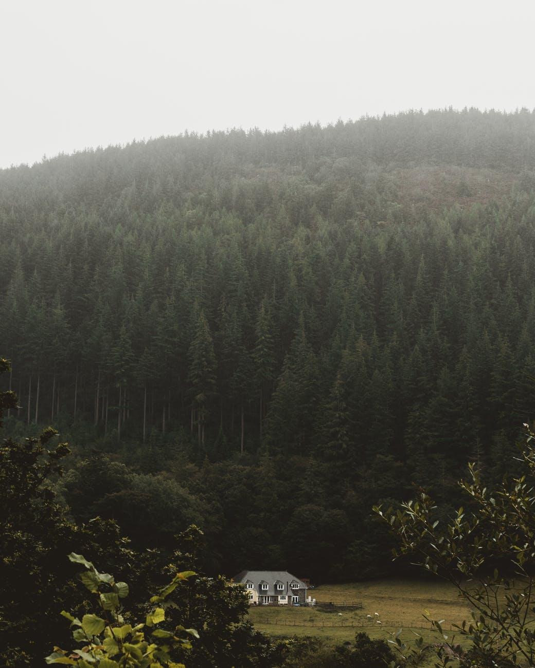 jakt skog